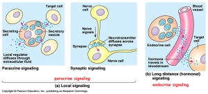 Cell_signaling